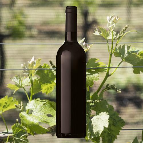Bordeaux_klassisch_BildKHHAJrffYE70e